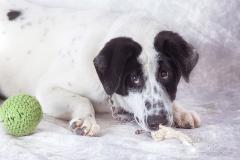 Calendario amigos del perro 2018 011