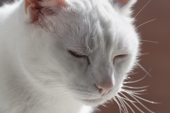 Gato retrasto 05