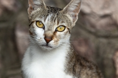 Gato retrato