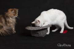 La curiosidad felina