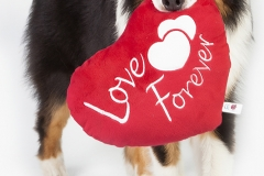 Dog love is forever