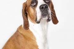 Mirada de perro inocente