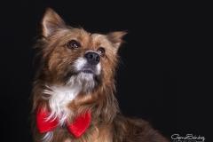 Mirada perro elegante