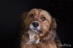 Mirada perro triste