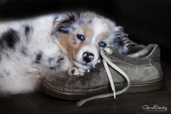 Perro con zapato