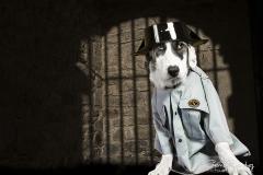 perro guardia civil mirada