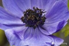 Fotografía de flor gemsanchezfotografia.com