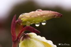 Gotas en flor