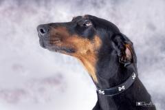 Retrato perro