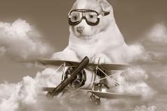 Perro aviador