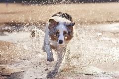Chapuzón de perro