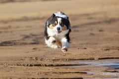 Perro en el aire