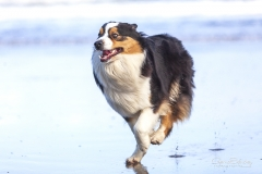 Perro en la playa 01
