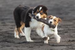 Perros con un palo