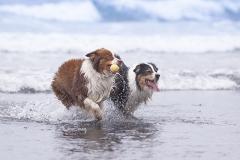 Perros corriendo en la playa