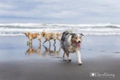 Perros en la playa 02