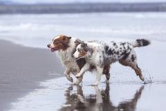 Perros en la playa 06