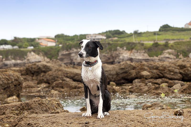 Playa para perros Gijón