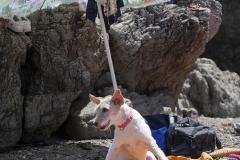 Playa de perros en Gijón