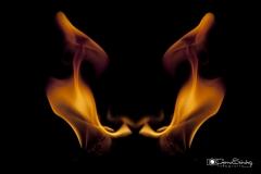 pelvis de fuego