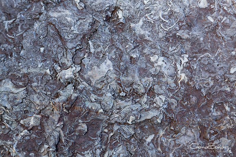 Fósiles del Devónico