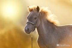 caballo retrato 04