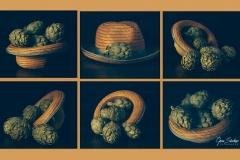 Cosecha-de-alcachofas