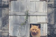 Gato-en-ventana
