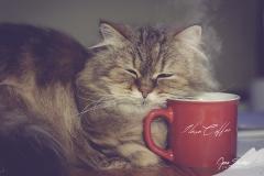 I-love-coffee-R