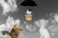 Tres gatos sobre el tejado