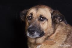 Mirada de perro 02