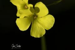 1_Flor-amarilla