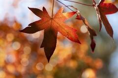 Hojas-en-otoño