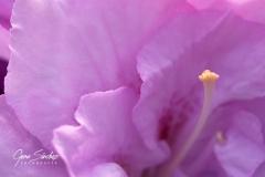 flor-macro-orsa-2
