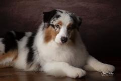 Estudio-foto-perros