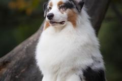 Perros-fotografía-profesional