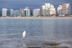 Gijón garza en la mar