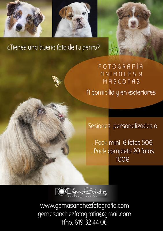 Fotografía animales y mascotas